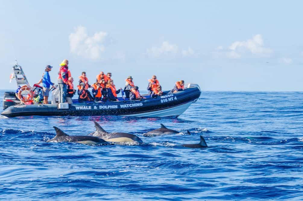 Delfine beobachten